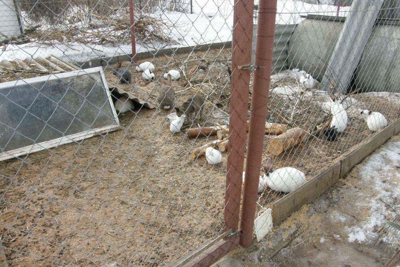 Разведение кроликов в вольерах