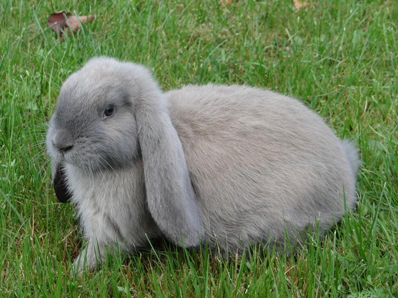 свернул, кролик баранчик фото они какой-то момент