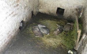 4 кролика на сене