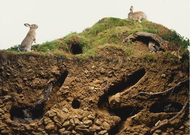 Место обитания кролика и зайца