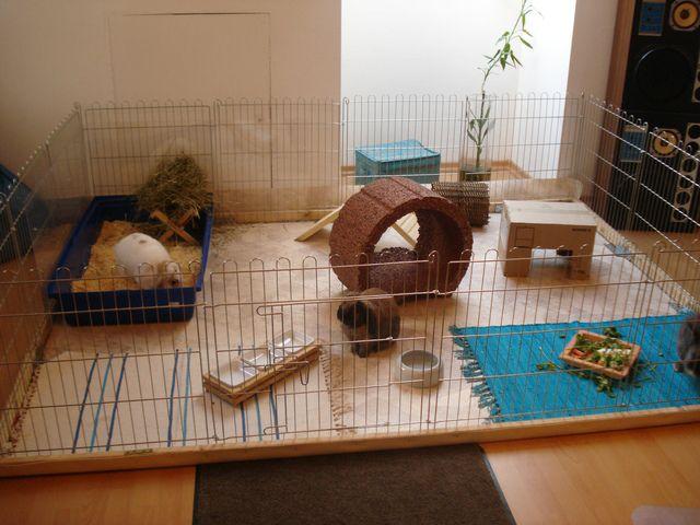 Для правильного развития и комфортной жизни карликовому кролику следует обустроить просторный вольер