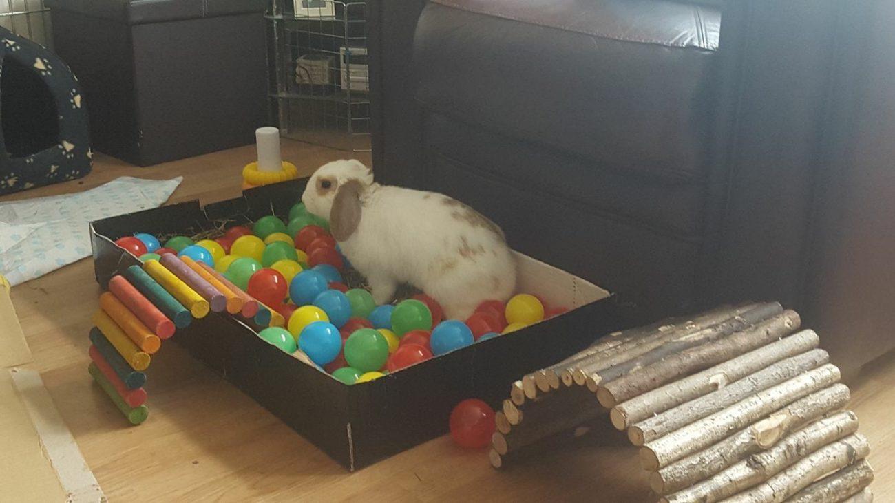 Домашний кролик бассейн с шариками