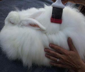 Вычесывает кролика