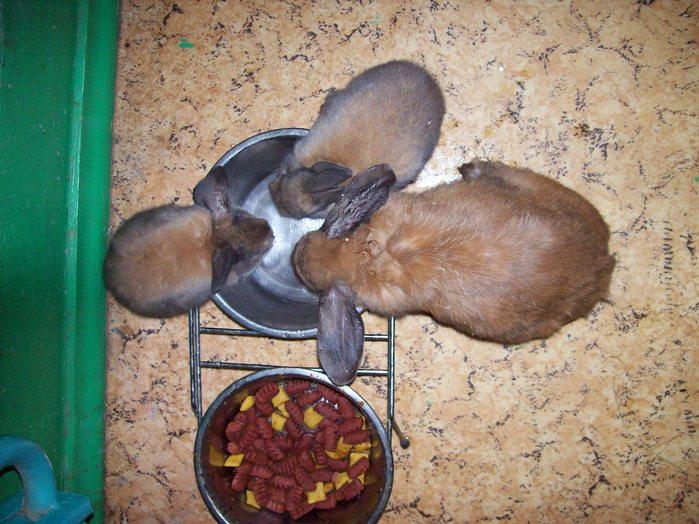 вакуумные поилки для кроликов
