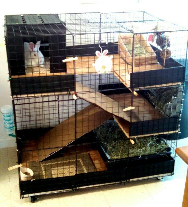 Домашний кролик большая клетка