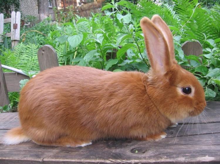 картинка красного кролика брагинский фильмография
