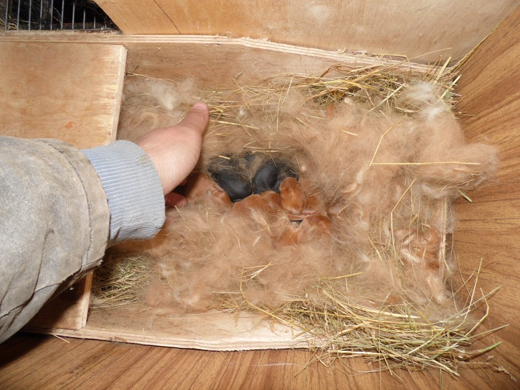 Маточник для крольчихи своими руками