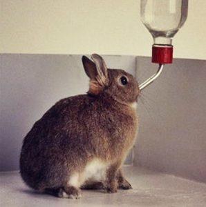 Как сделать поилку для кроликов своими руками