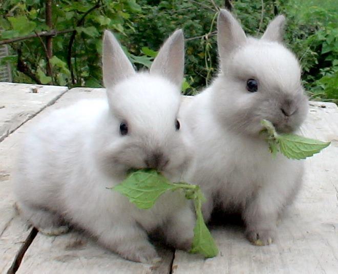 Продолжительность жизни кроликов зависит от разных факторов