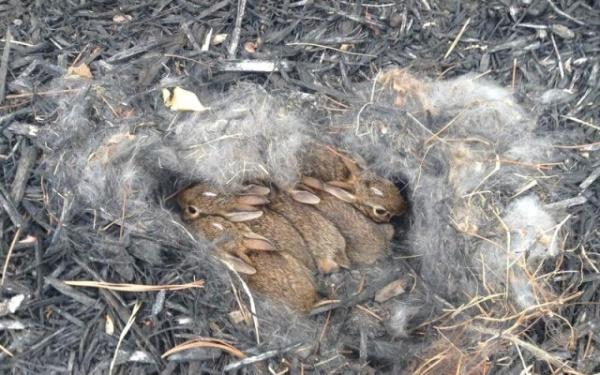 Детеныши кролика и зайца