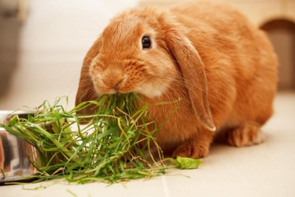 Гормональные сбои у кроликов