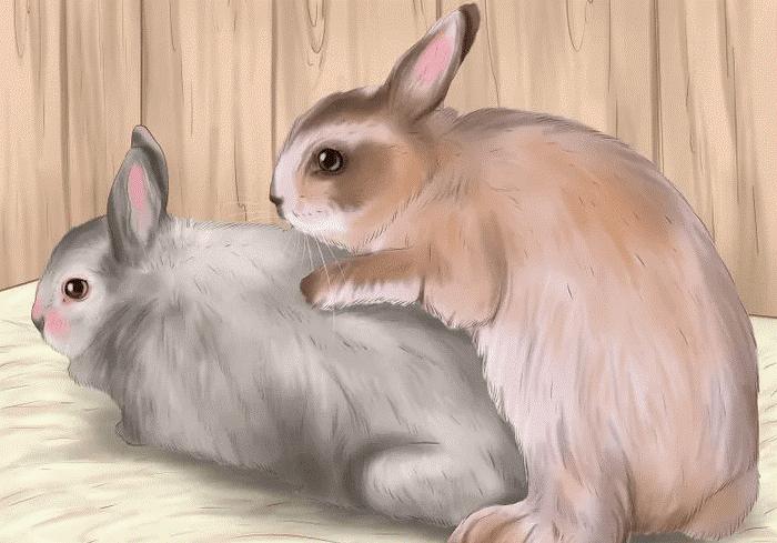 Крольчиха не хочет спариваться: что делать{q}