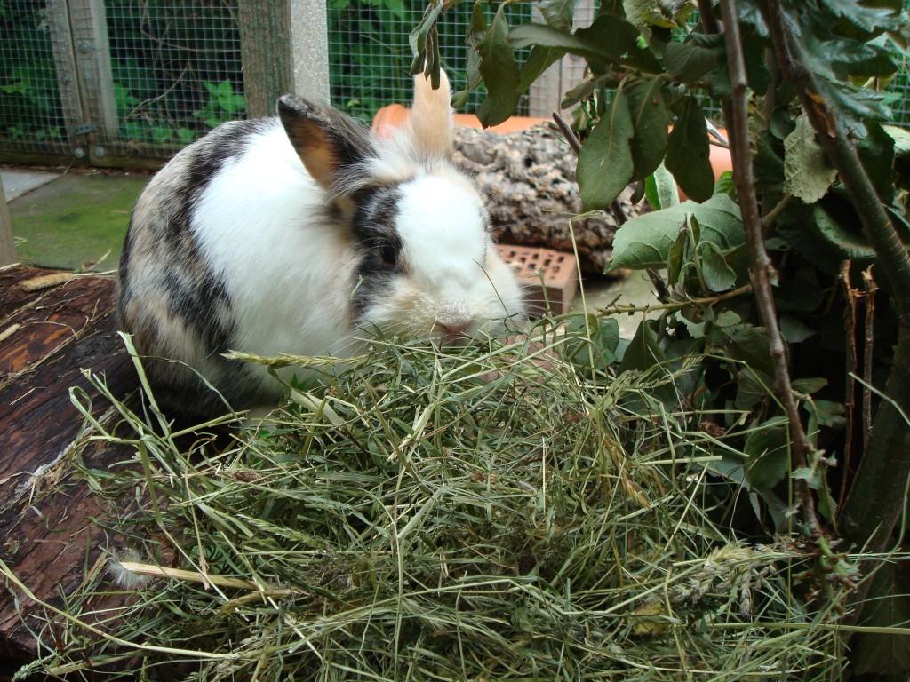 Кормление крольчихи зимой