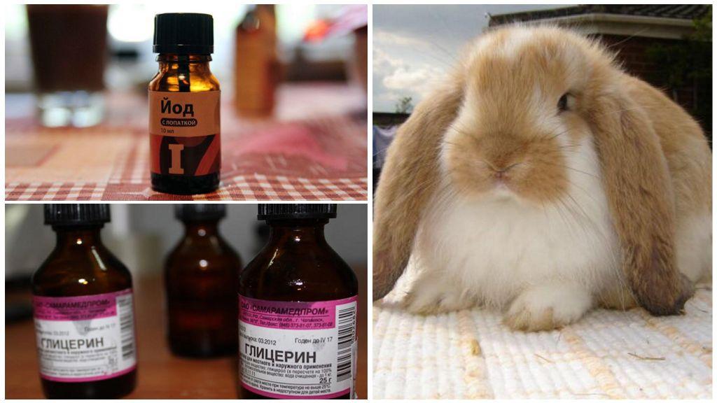 Профилактика ушного клеща у кролика