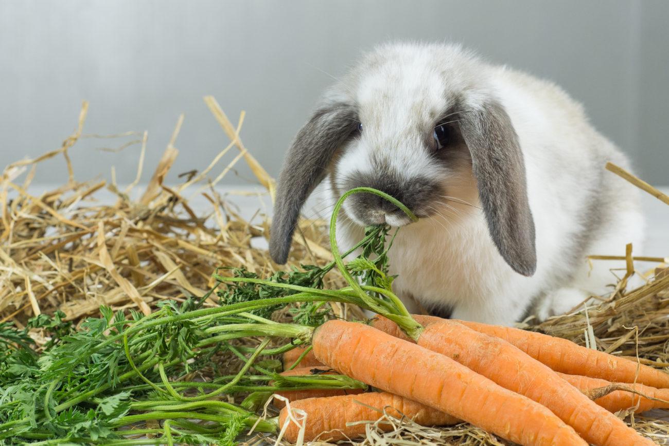 Кормление крольчихи летом