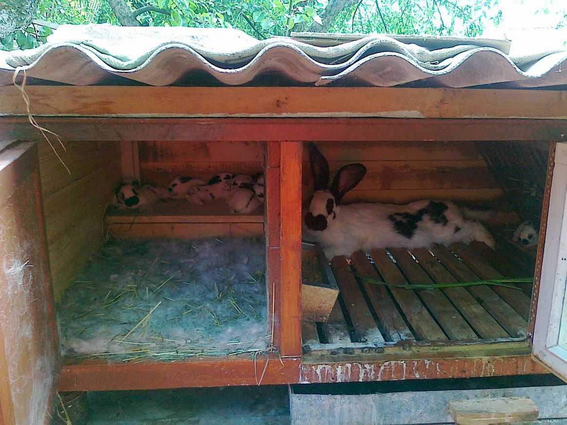 клетка для крольчихи и крольчат