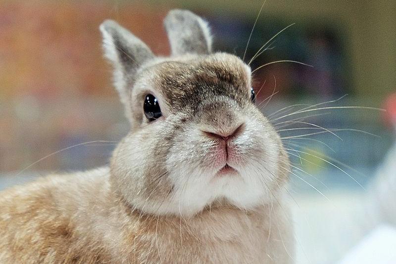 Как кролики видят цвета