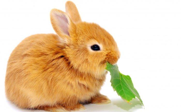чем кормить кроликов для быстрого роста