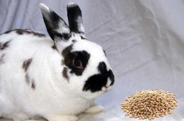 какие крупы можно давать кроликам