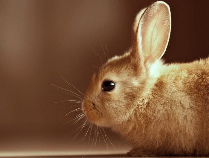 как видят кролики