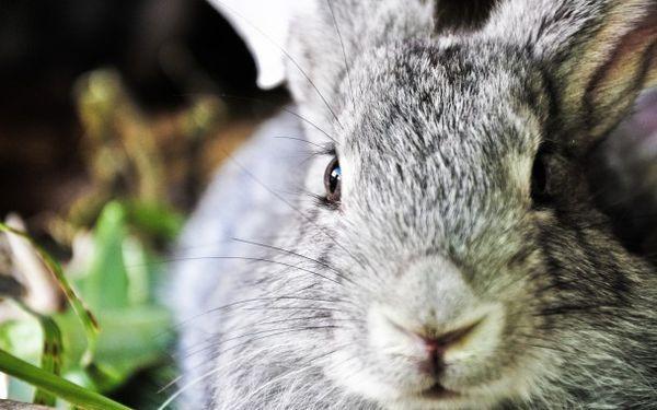 Расположение органов зрения у кроликов