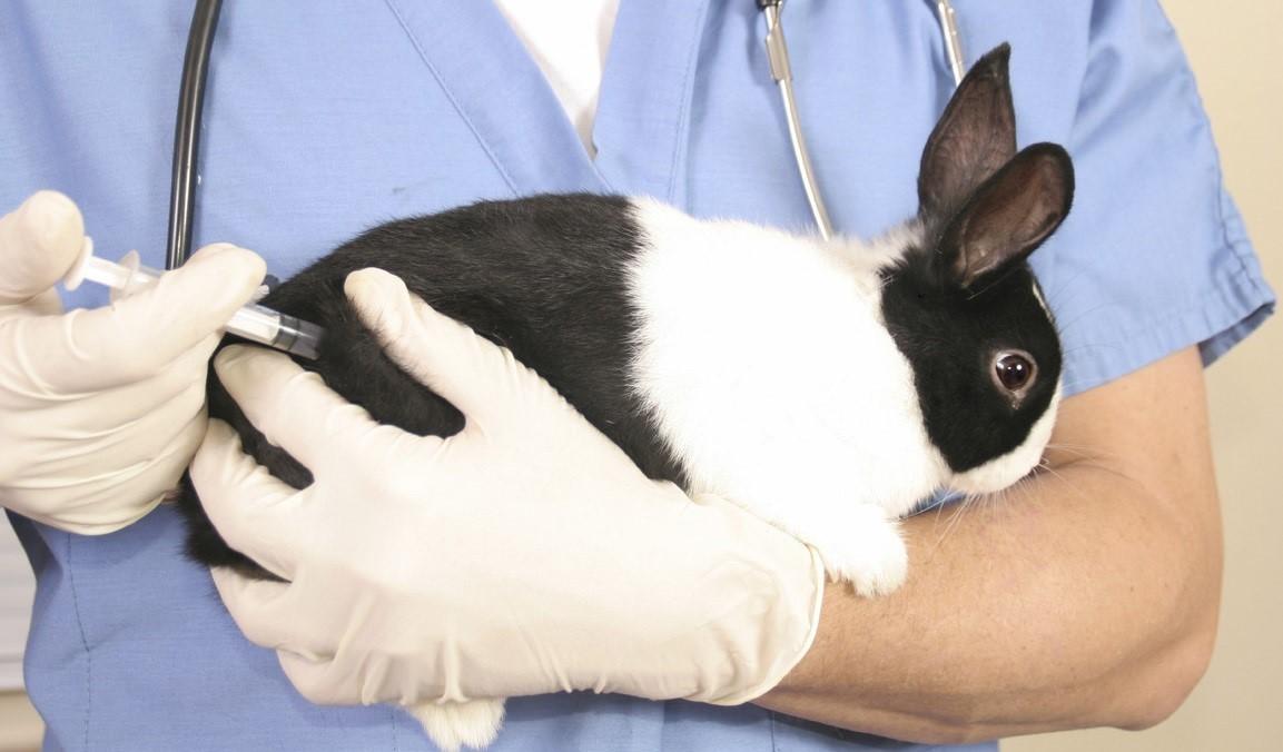Как делать прививку кролику