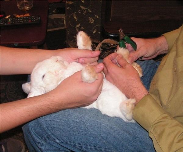 Фиксация кролика