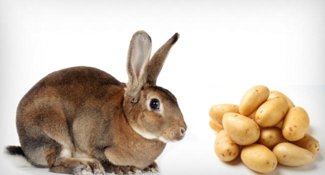 Картошка в рационе кроликов