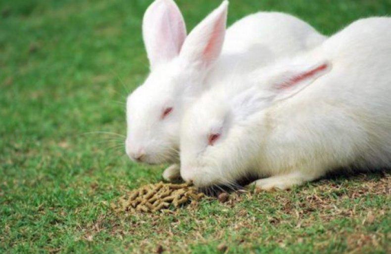 Кролики хиколь и хиплус