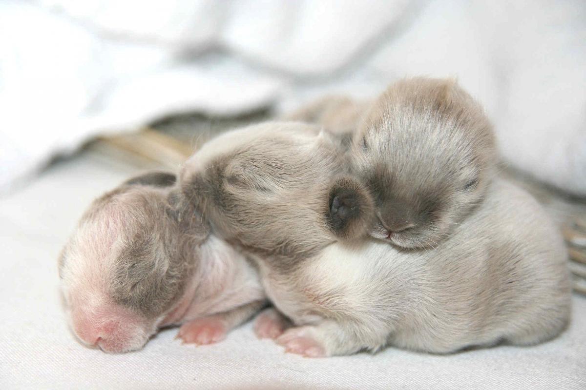 Недавно родившиеся кроли