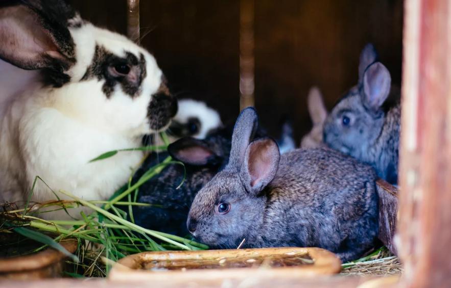 Когда кролики спариваются: половозрелость кроликов и процесс вынашивания