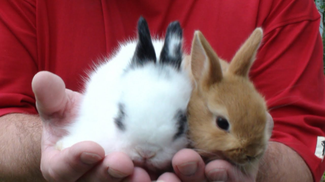 как играть с кроликом декоративным дома