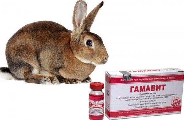 Гамавит для кроликов