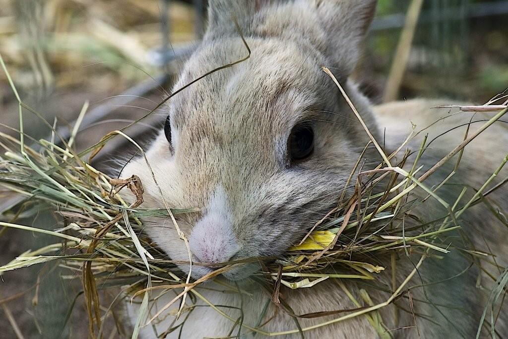 Лучшее сено для кролика