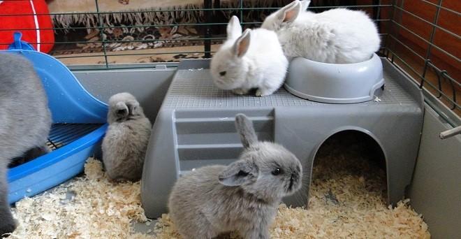 Домик кролика