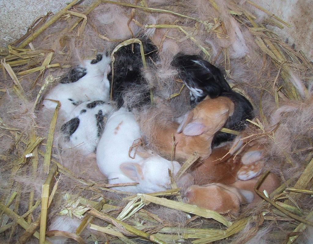 Кроли в своем укрытии