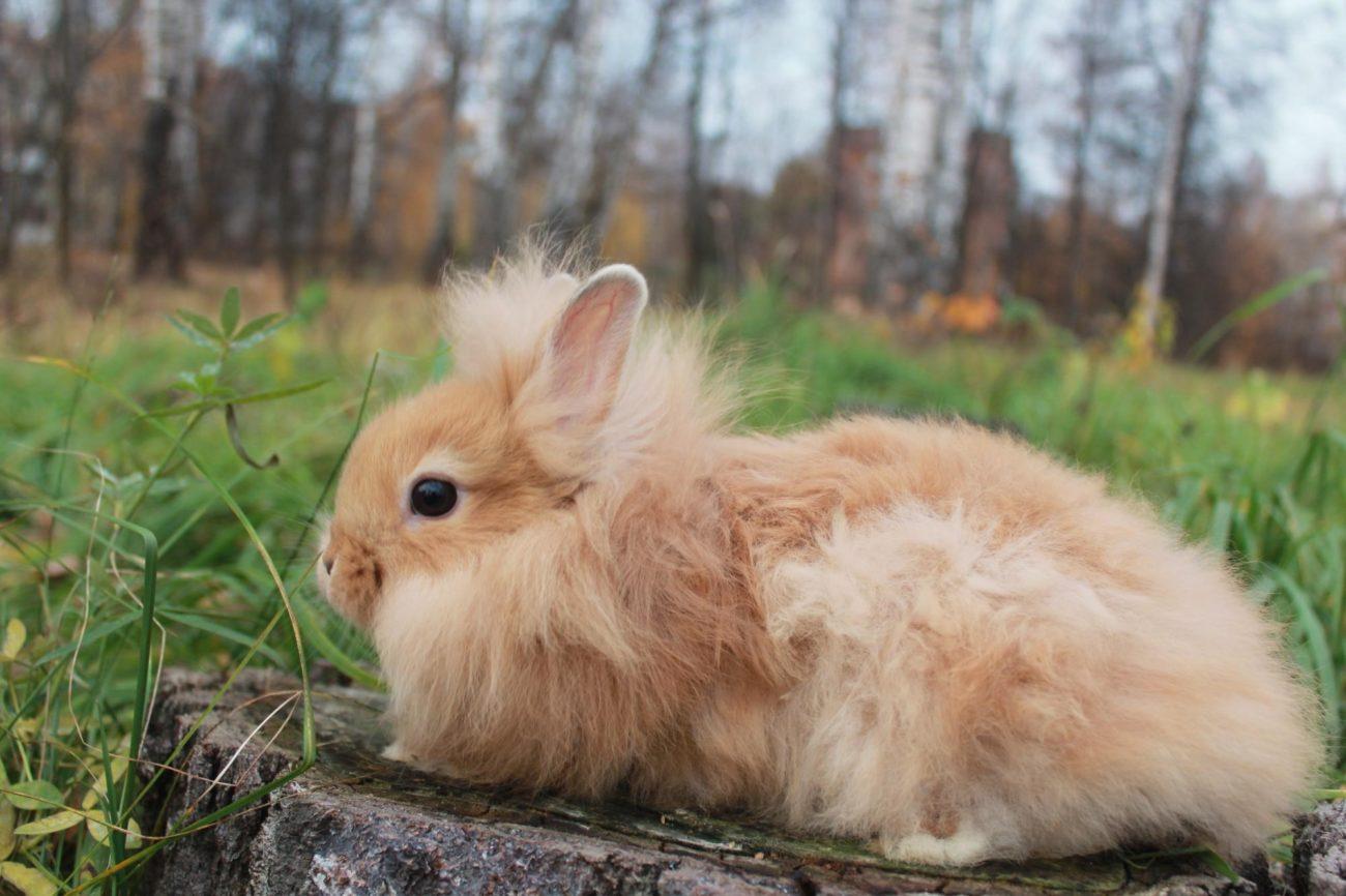 оранжевый кролик