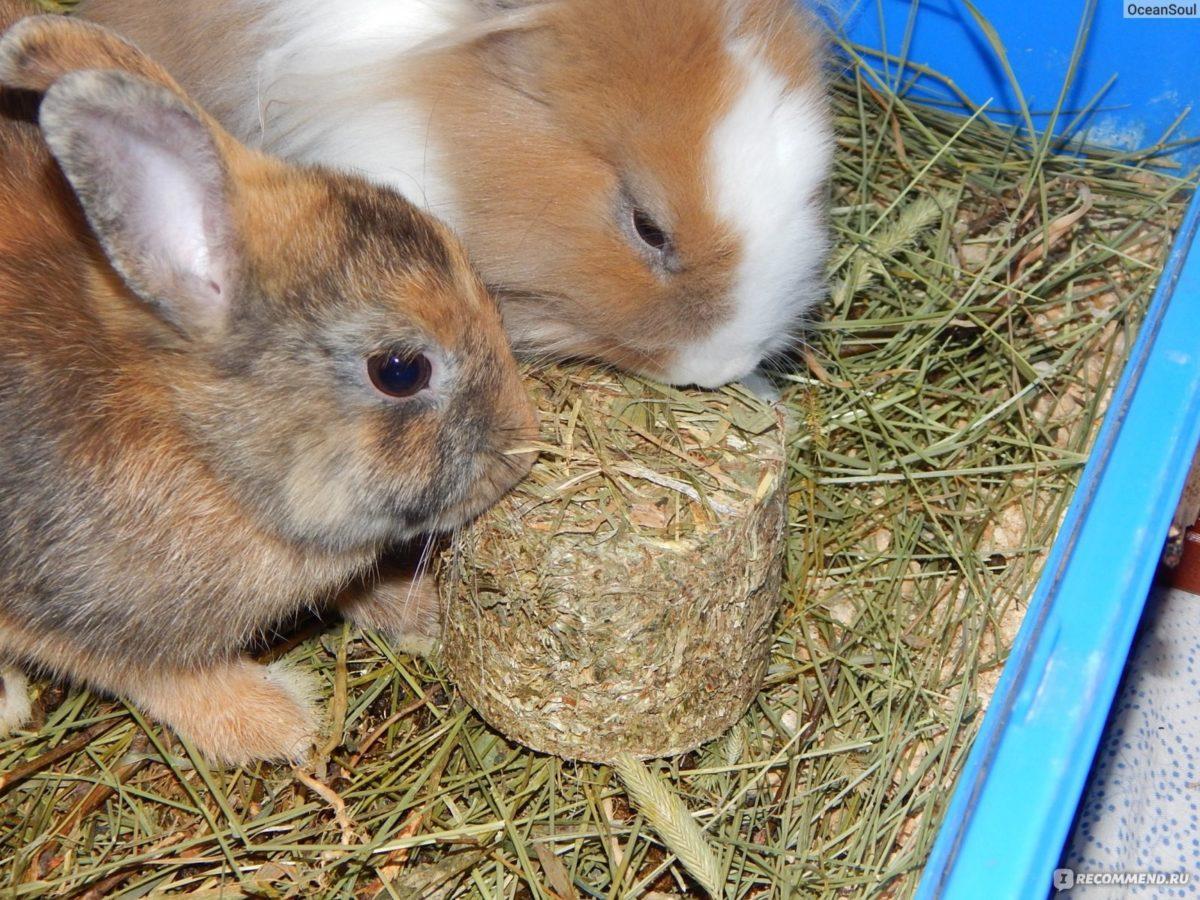 Кормление кролика сеном
