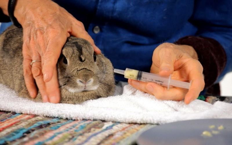 Способ применения «Байкокса» для кроликов