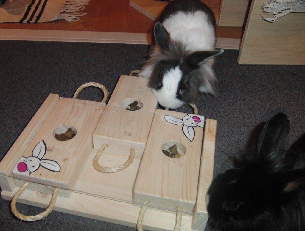 Игры с декоративным кроликом