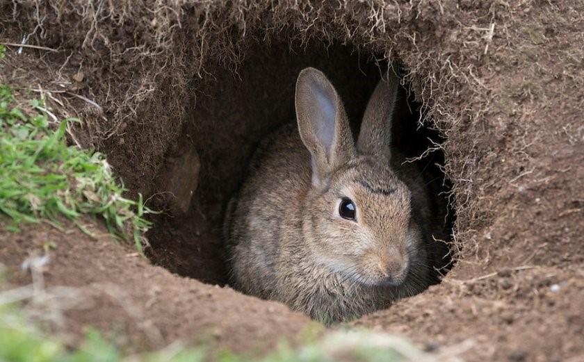 Кролики и норы