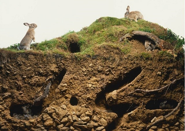 Норы диких кроликов