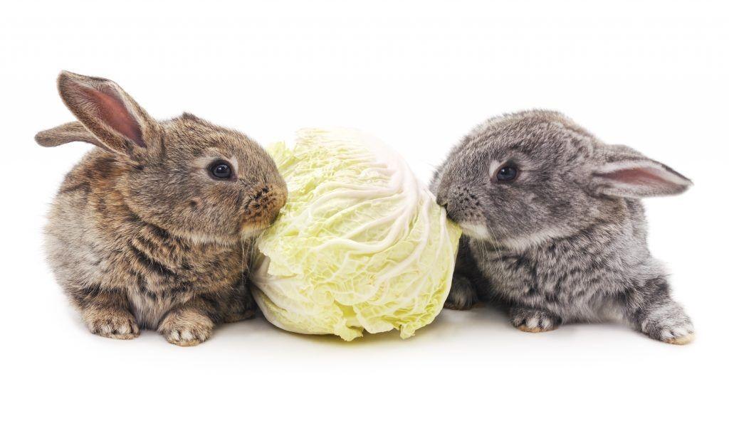 Капуста кроликам