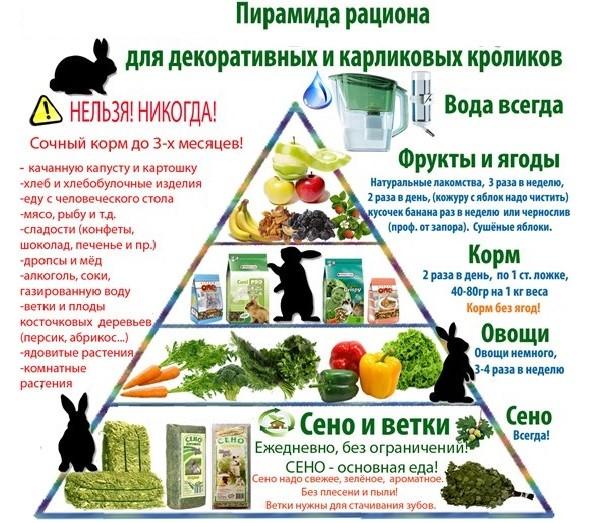 Чем можно кормить кролика
