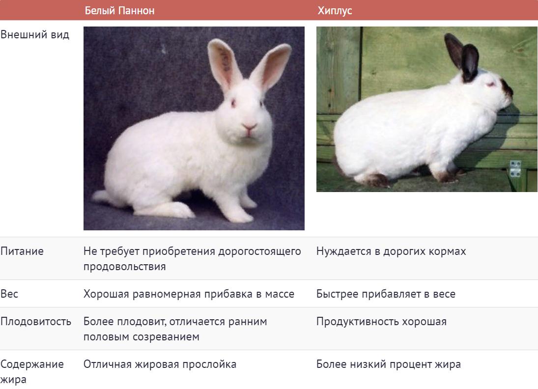 Сравнительная характеристика кроликов