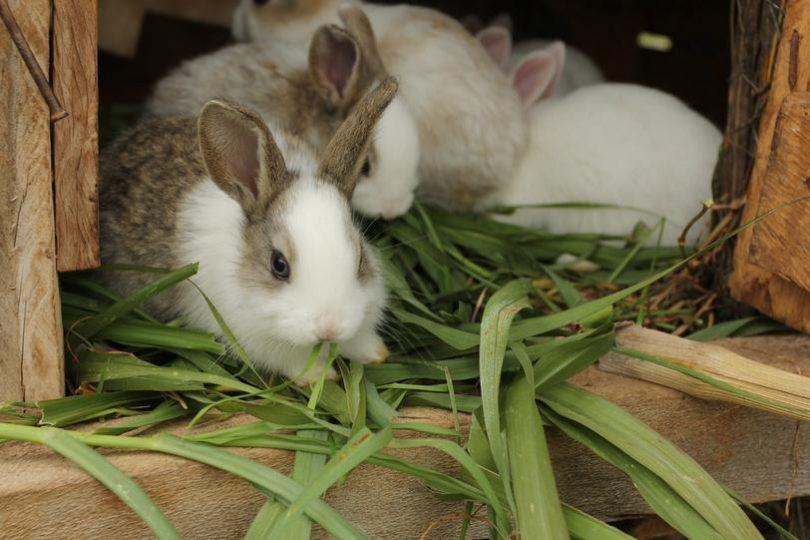 Частота кормления кроликов