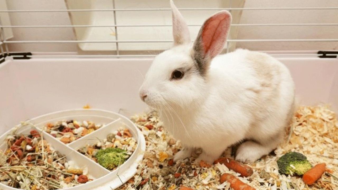 Едят ли кролики свой помёт
