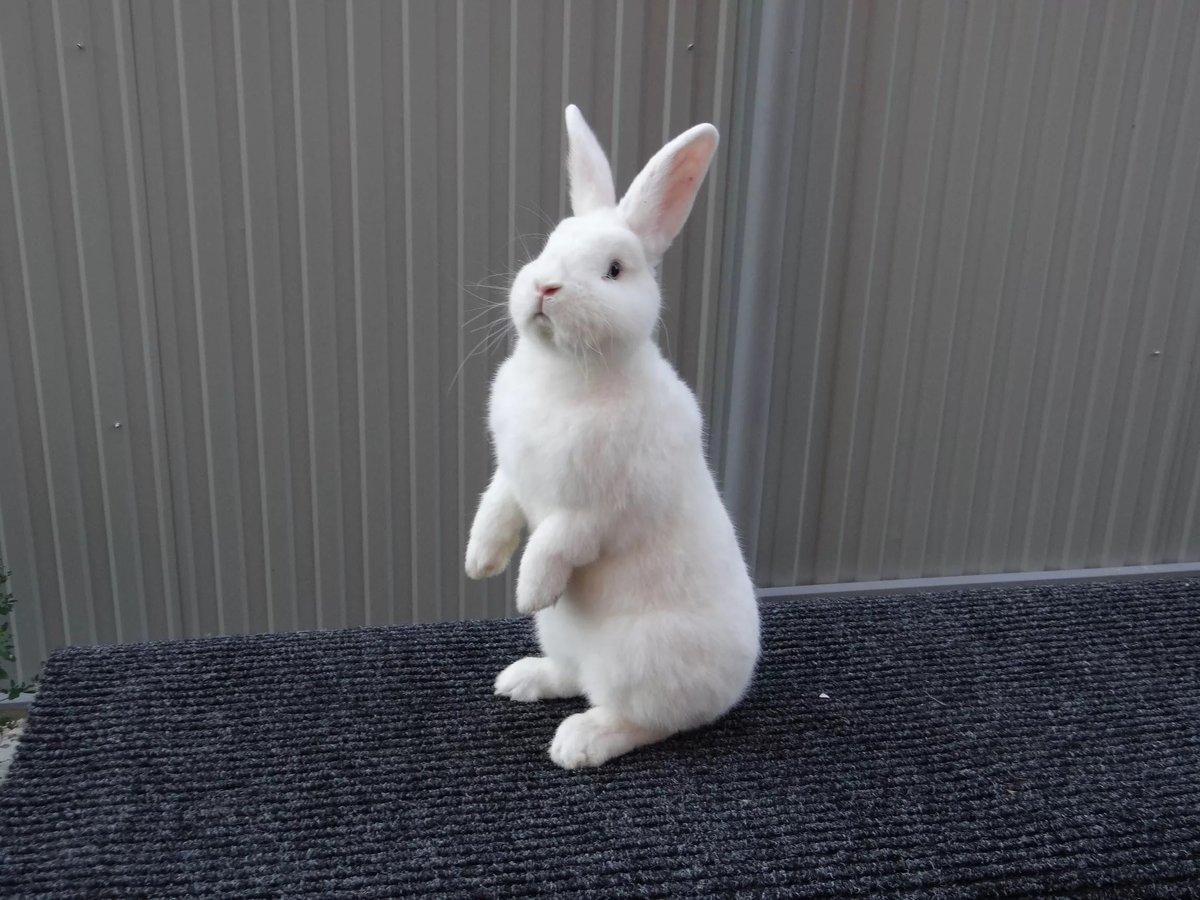 Питание белых кроликов