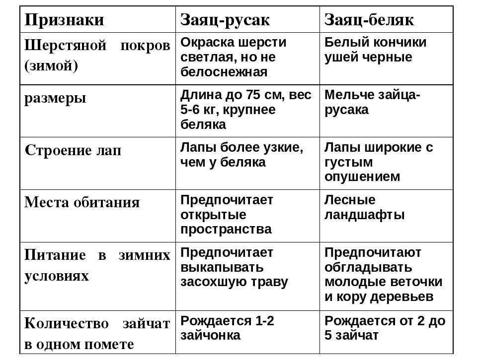 Сходство беляка и русака