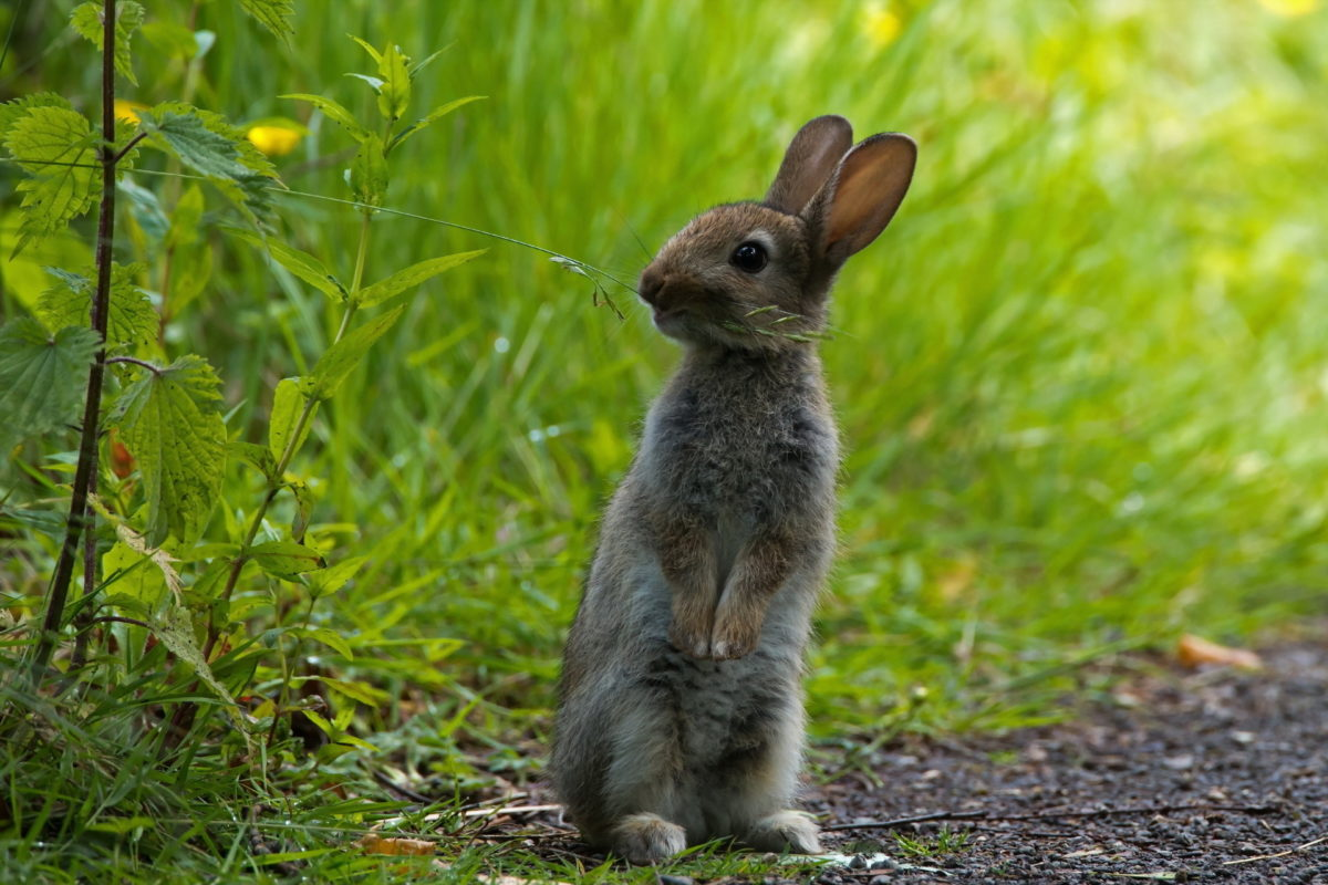 Место обитания зайца